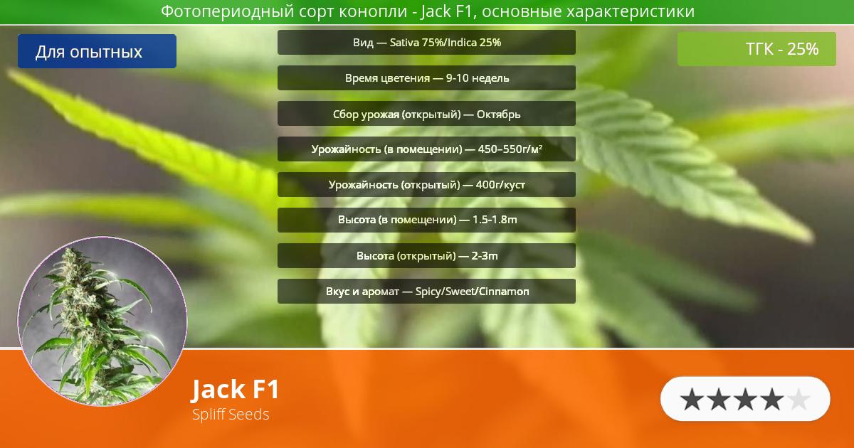 Инфограмма сорта марихуаны Jack F1