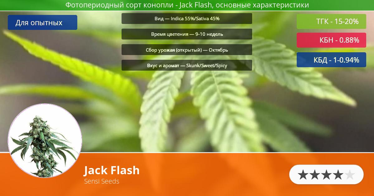 Инфограмма сорта марихуаны Jack Flash