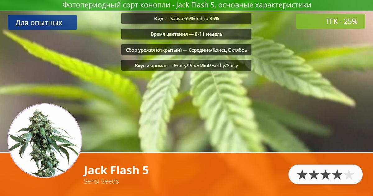 Инфограмма сорта марихуаны Jack Flash 5