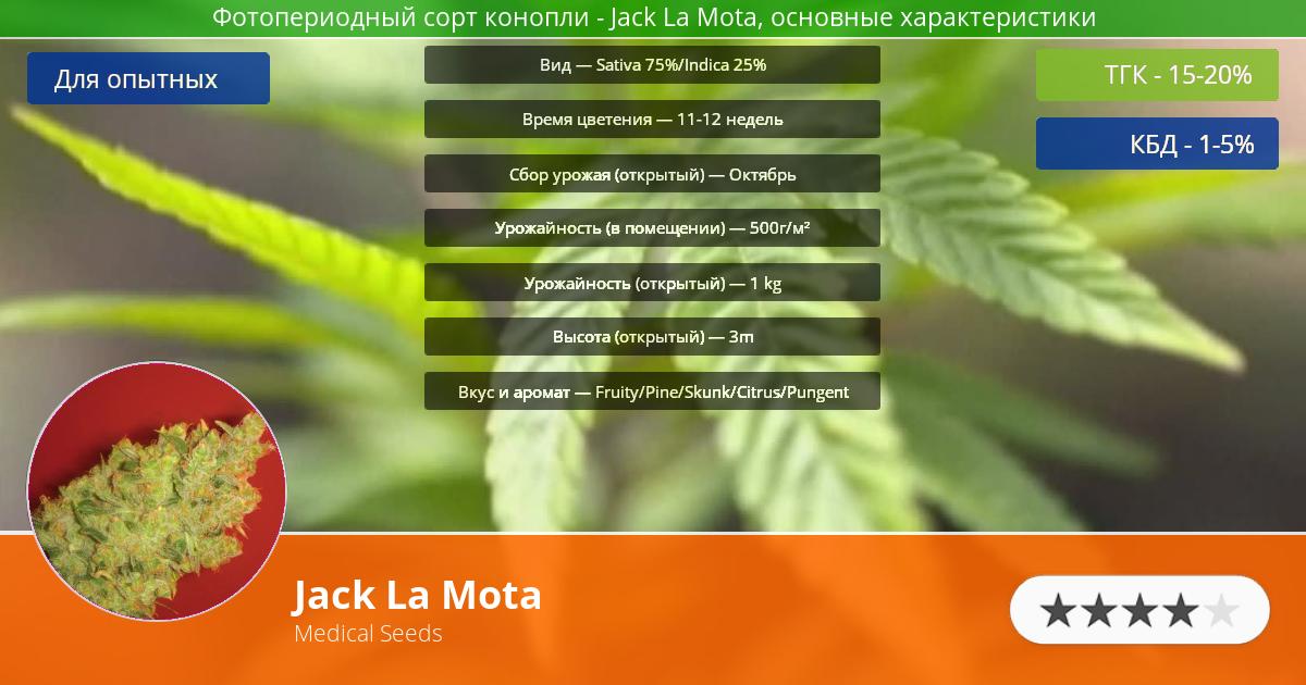 Инфограмма сорта марихуаны Jack La Mota