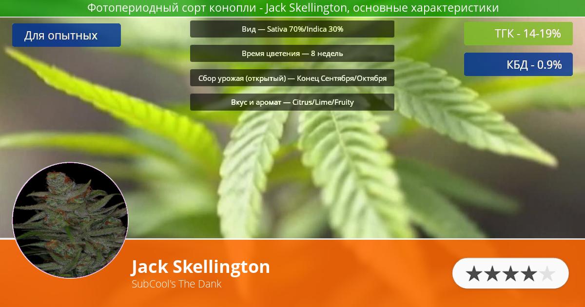 Инфограмма сорта марихуаны Jack Skellington
