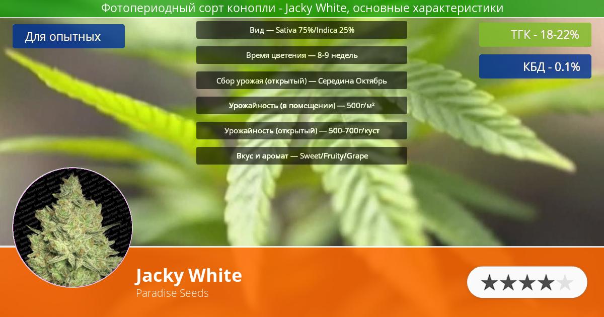 Инфограмма сорта марихуаны Jacky White
