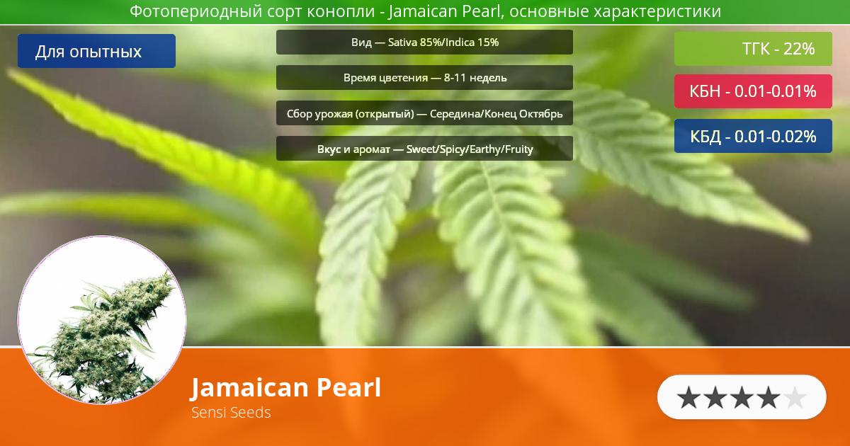 Инфограмма сорта марихуаны Jamaican Pearl