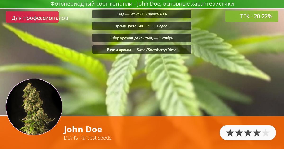 Инфограмма сорта марихуаны John Doe
