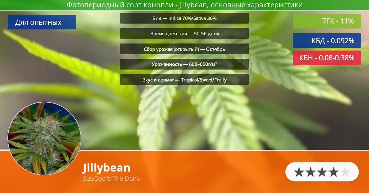 Инфограмма сорта марихуаны Jillybean