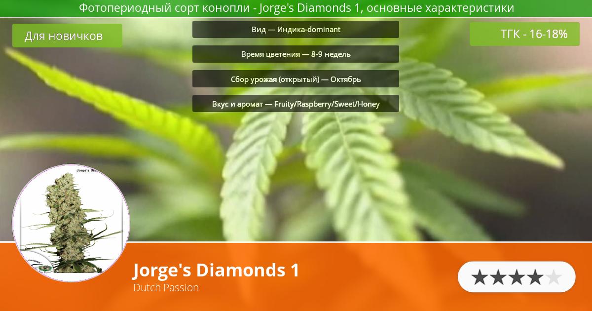 Инфограмма сорта марихуаны Jorge's Diamonds 1