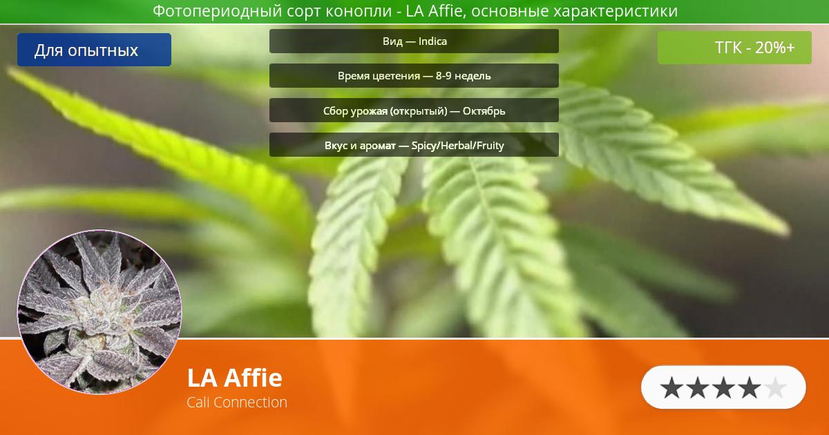Инфограмма сорта марихуаны LA Affie