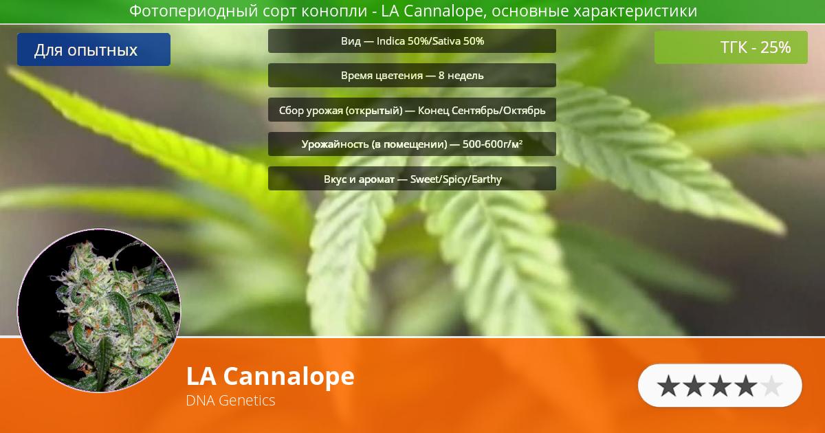 Инфограмма сорта марихуаны LA Cannalope