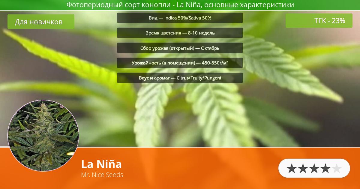 Инфограмма сорта марихуаны La Niña