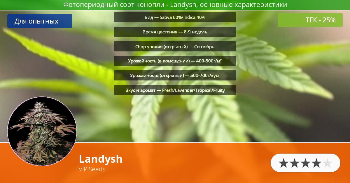 Инфограмма сорта марихуаны Landysh