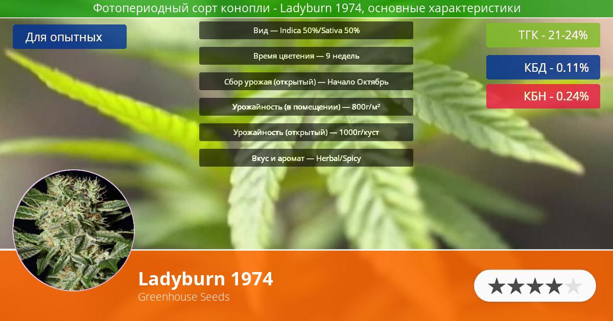 Инфограмма сорта марихуаны Ladyburn 1974