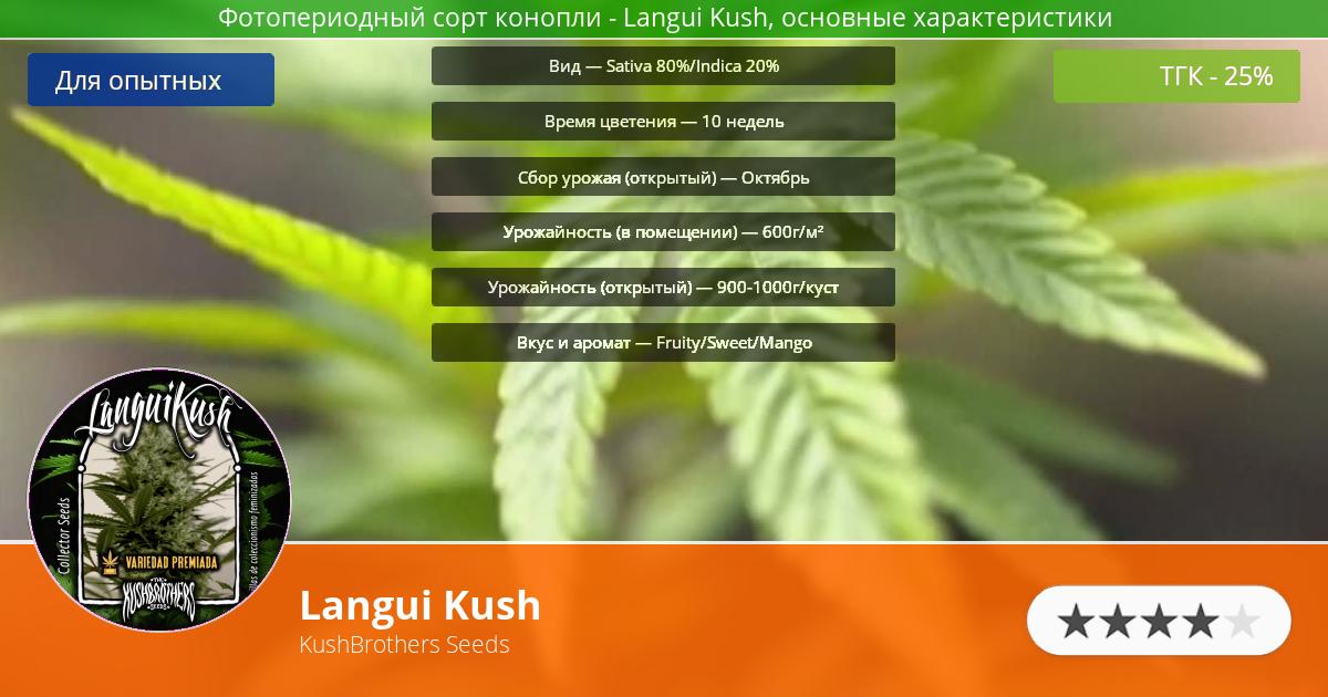 Инфограмма сорта марихуаны Langui Kush