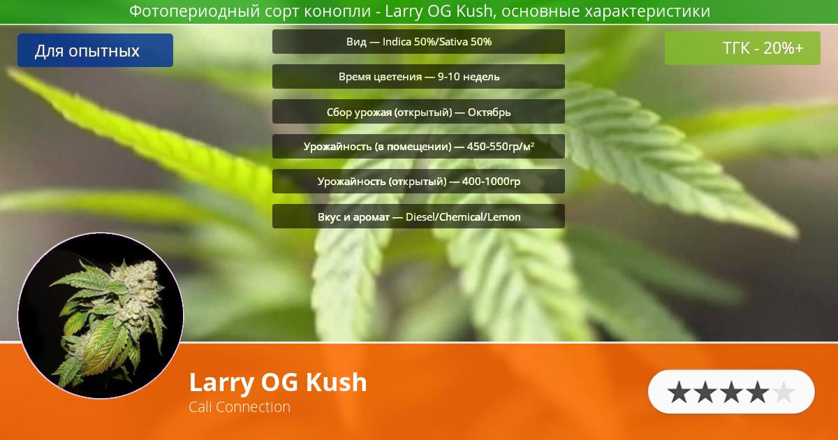 Инфограмма сорта марихуаны Larry OG Kush