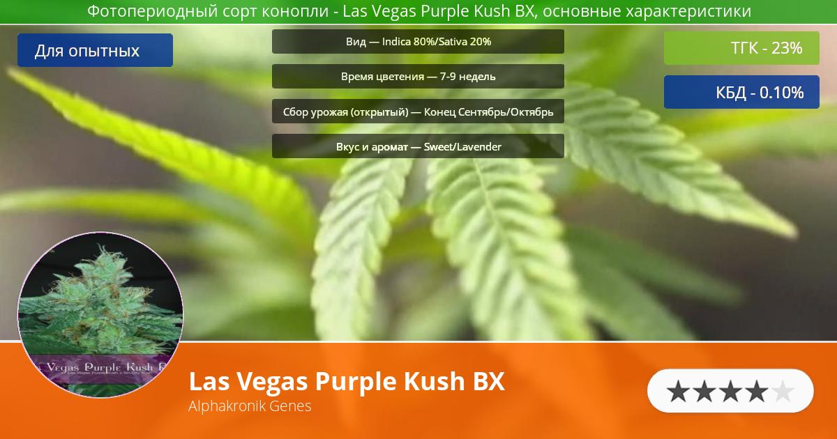 Инфограмма сорта марихуаны Las Vegas Purple Kush BX