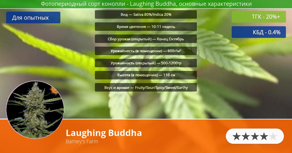 Инфограмма сорта марихуаны Laughing Buddha