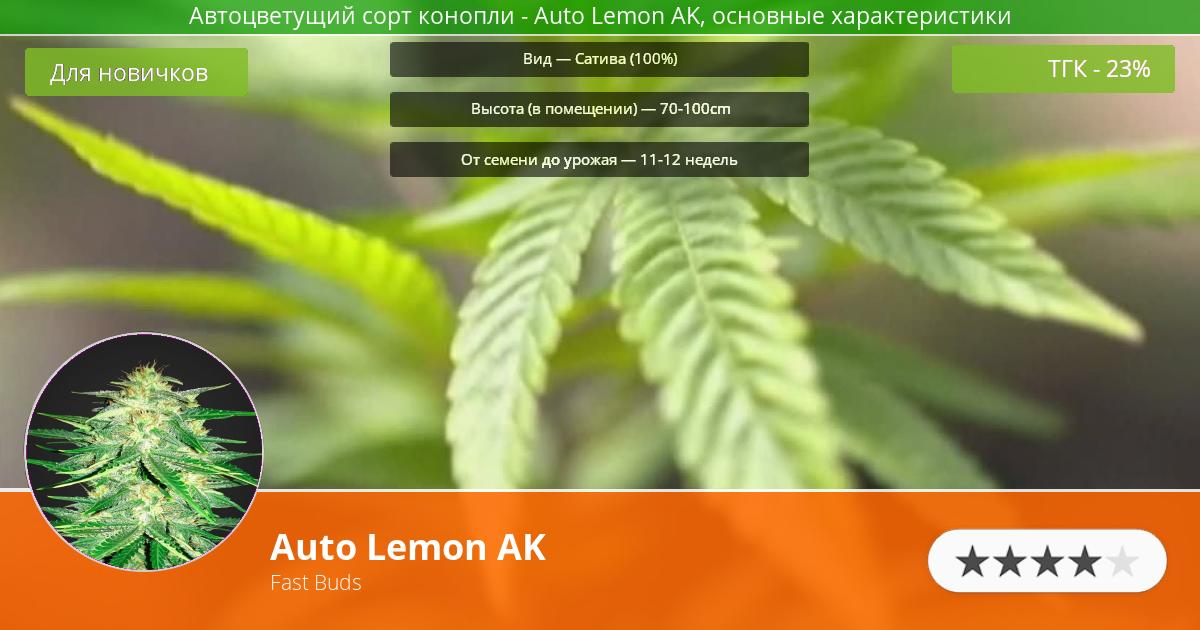 Инфограмма сорта марихуаны Auto Lemon AK