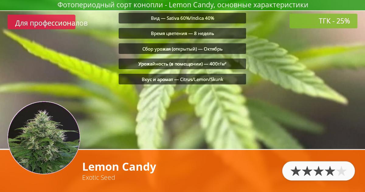 Инфограмма сорта марихуаны Lemon Candy