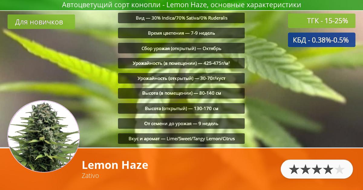 Инфограмма сорта Lemon Haze