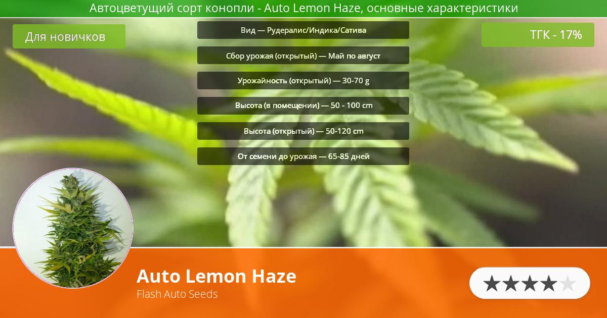Инфограмма сорта марихуаны Auto Lemon Haze