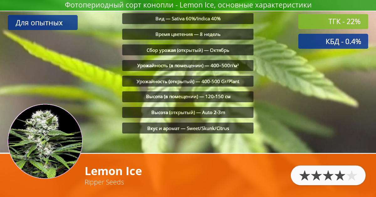 Инфограмма сорта марихуаны Lemon Ice