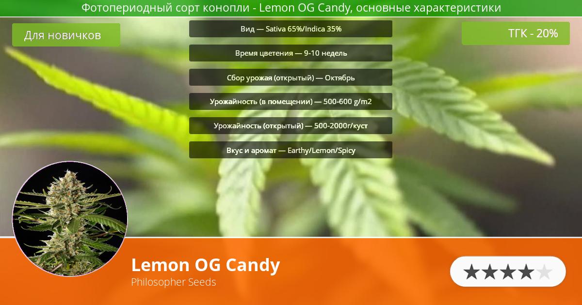 Инфограмма сорта марихуаны Lemon OG Candy