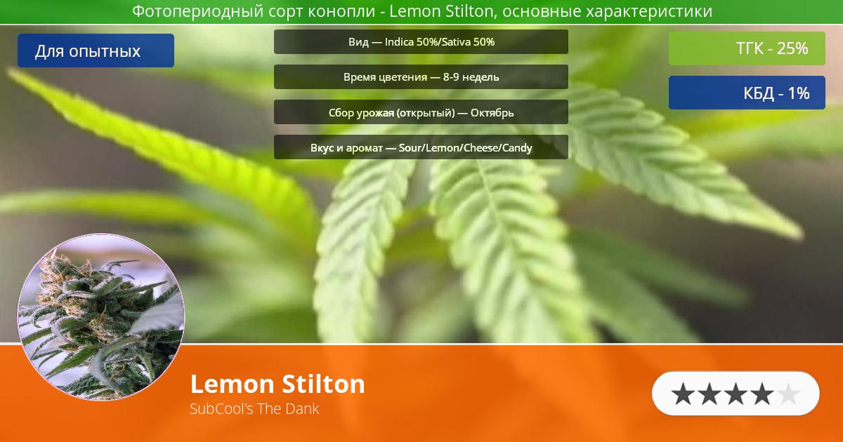 Инфограмма сорта марихуаны Lemon Stilton