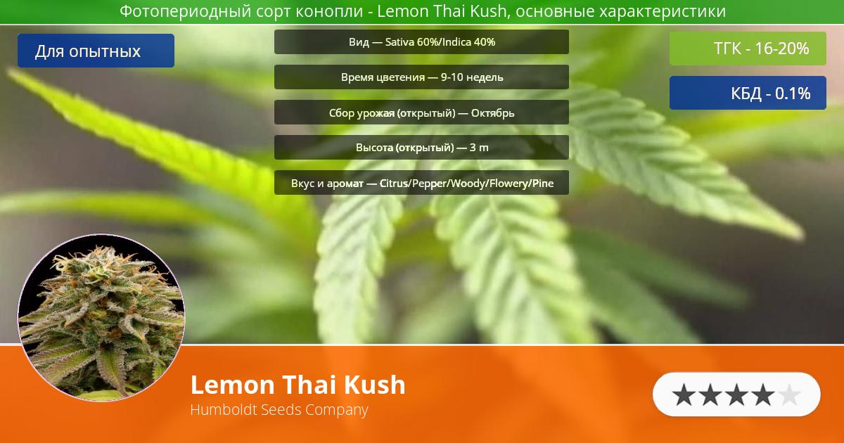 Инфограмма сорта марихуаны Lemon Thai Kush