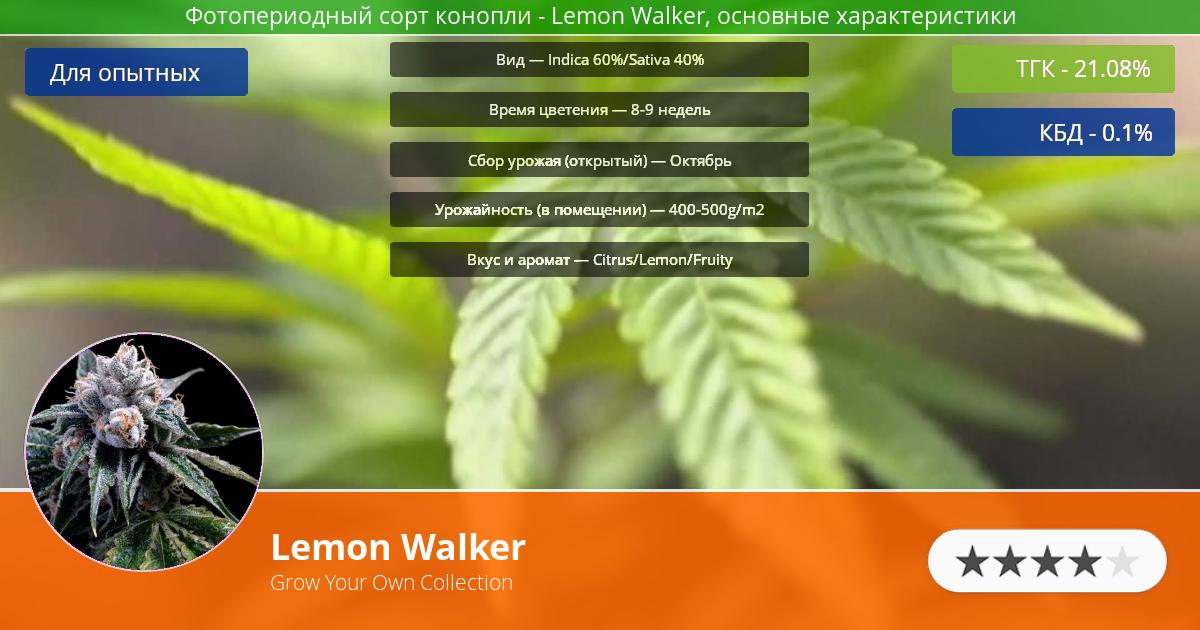 Инфограмма сорта марихуаны Lemon Walker