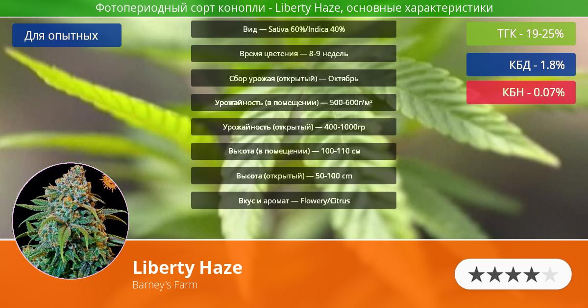 Инфограмма сорта марихуаны Liberty Haze