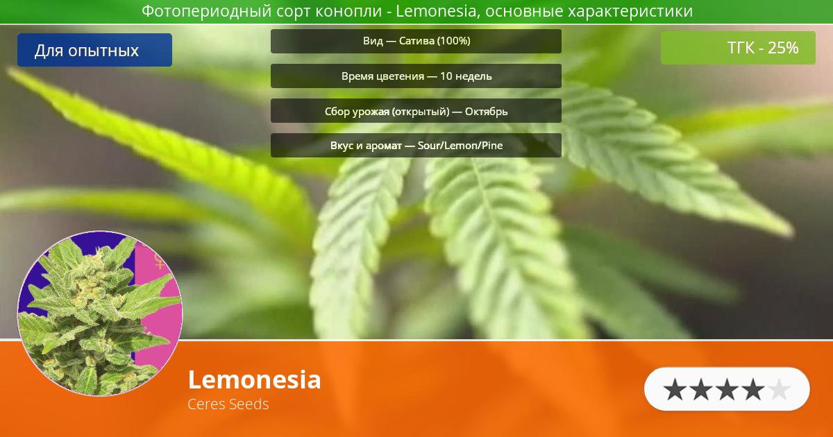 Инфограмма сорта марихуаны Lemonesia