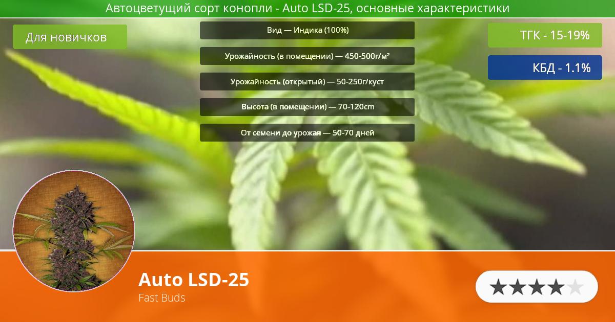 Инфограмма сорта марихуаны Auto LSD-25
