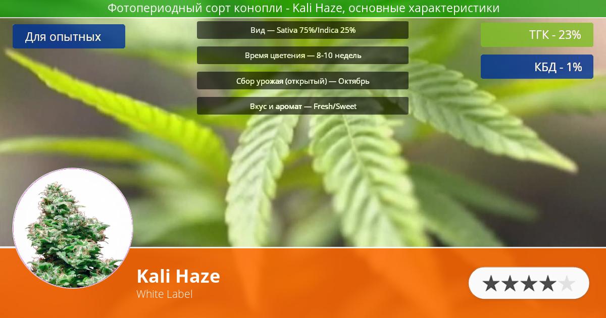 Инфограмма сорта марихуаны Kali Haze