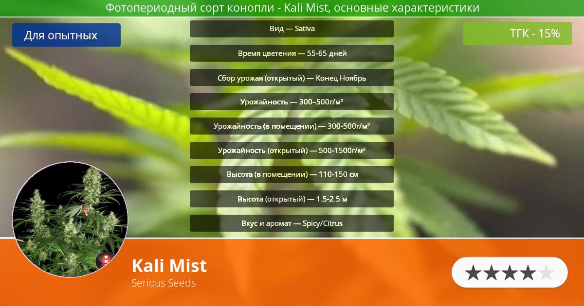 Инфограмма сорта марихуаны Kali Mist