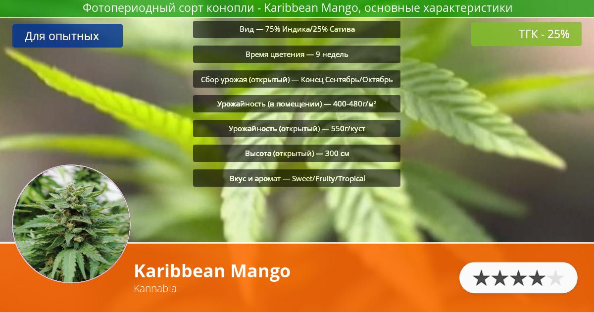 Инфограмма сорта марихуаны Karibbean Mango