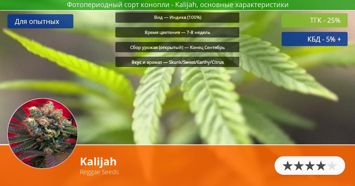 Инфограмма сорта марихуаны Kalijah