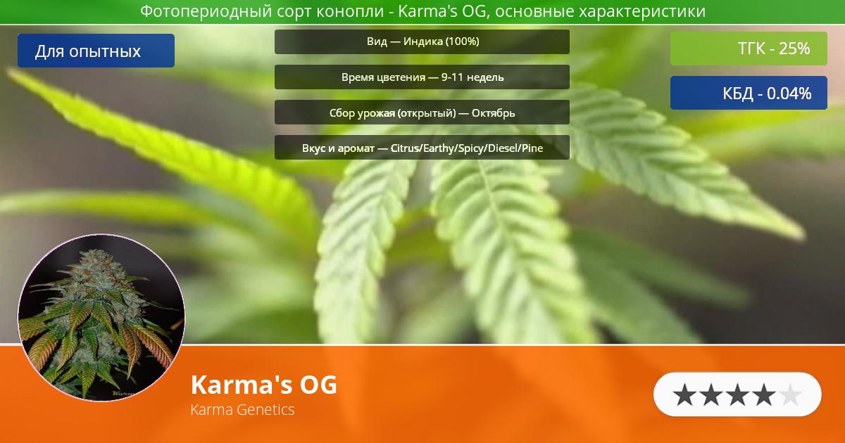 Инфограмма сорта марихуаны Karma's OG