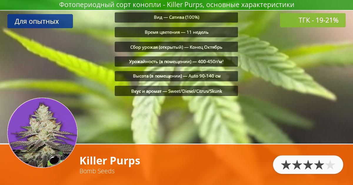 Инфограмма сорта марихуаны Killer Purps