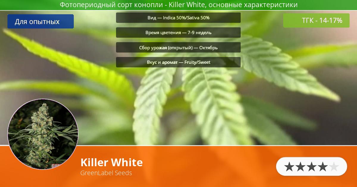Инфограмма сорта марихуаны Killer White
