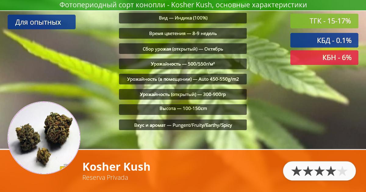 Инфограмма сорта марихуаны Kosher Kush