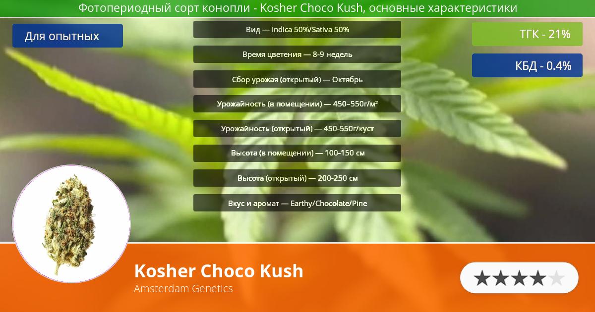 Инфограмма сорта марихуаны Kosher Choco Kush