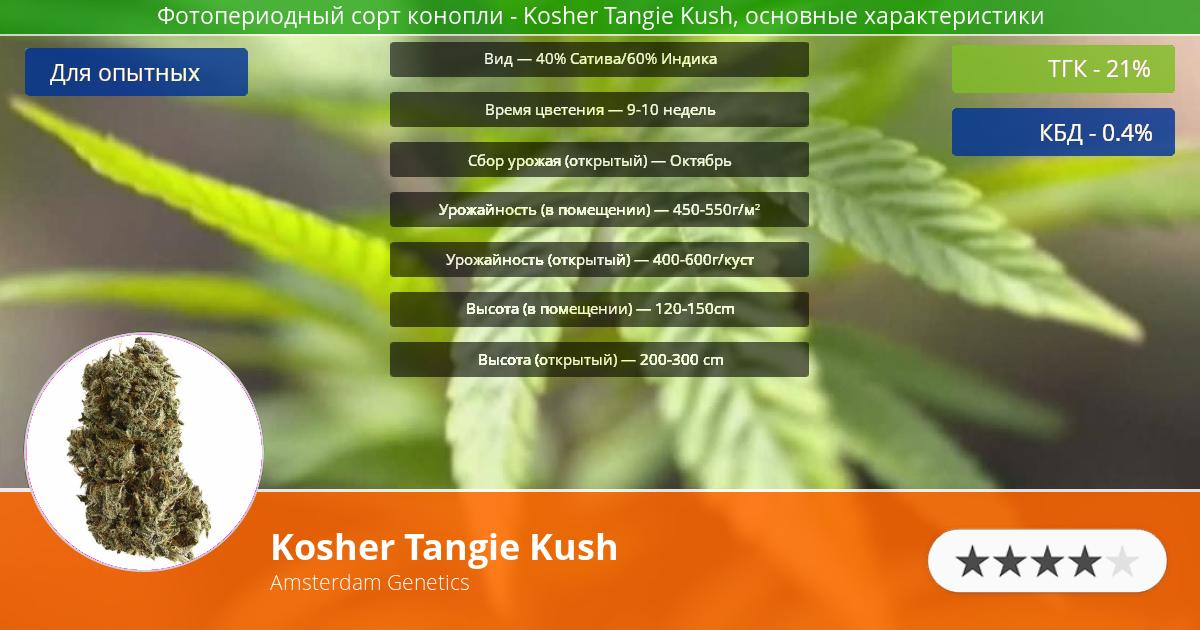 Инфограмма сорта марихуаны Kosher Tangie Kush