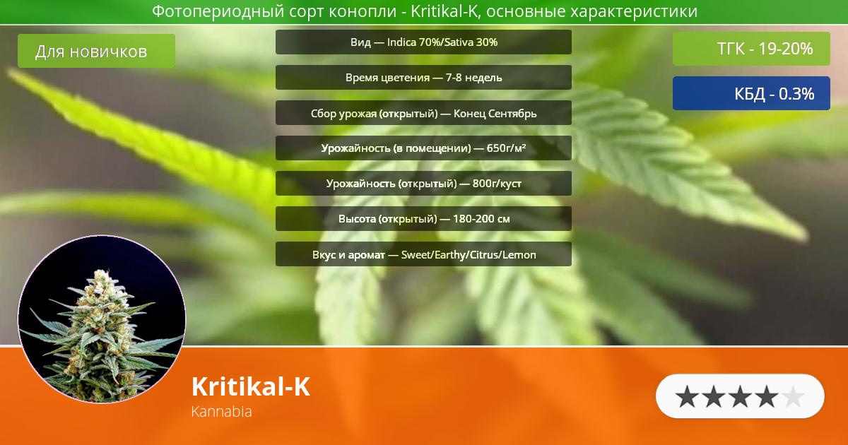 Инфограмма сорта марихуаны Kritikal-K