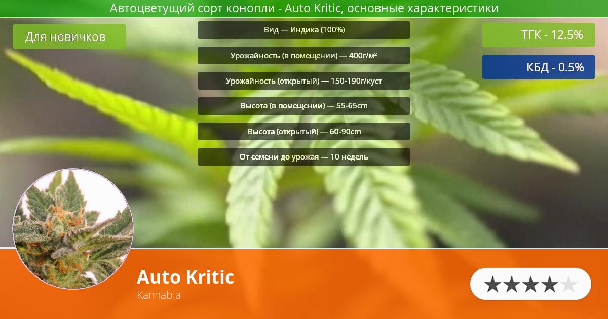 Инфограмма сорта марихуаны Auto Kritic