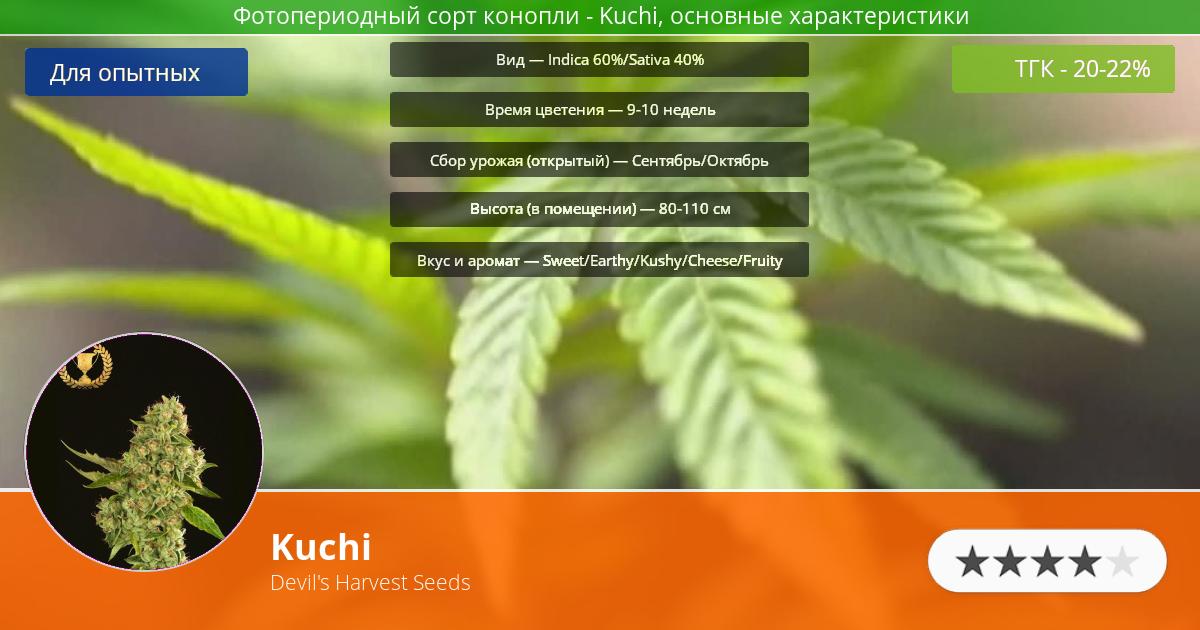 Инфограмма сорта марихуаны Kuchi