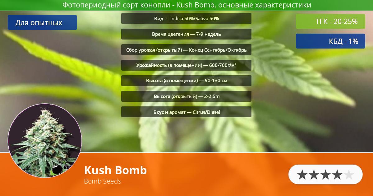 Инфограмма сорта марихуаны Kush Bomb
