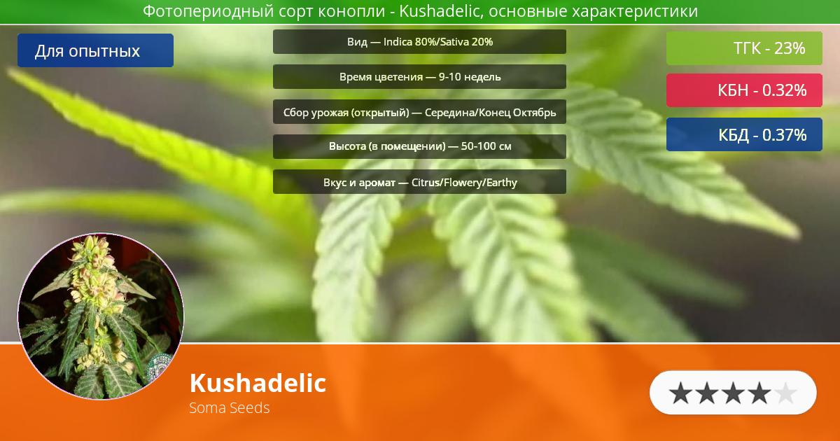 Инфограмма сорта марихуаны Kushadelic