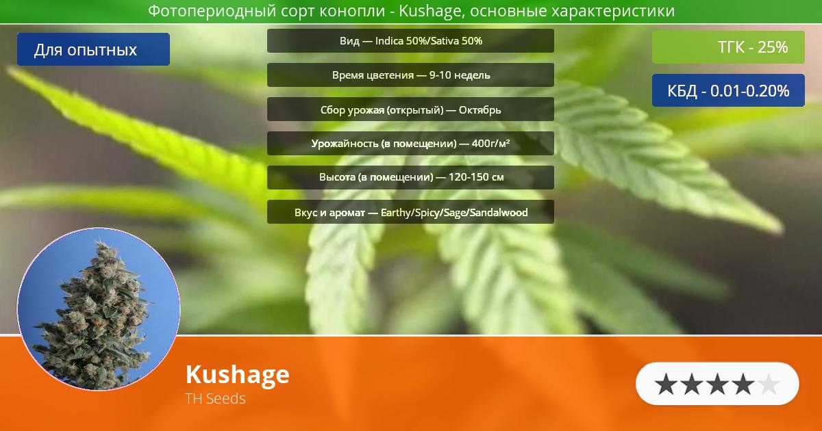 Инфограмма сорта марихуаны Kushage