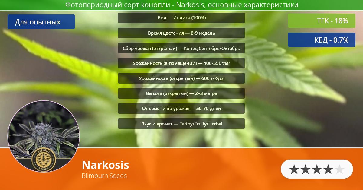 Инфограмма сорта марихуаны Narkosis