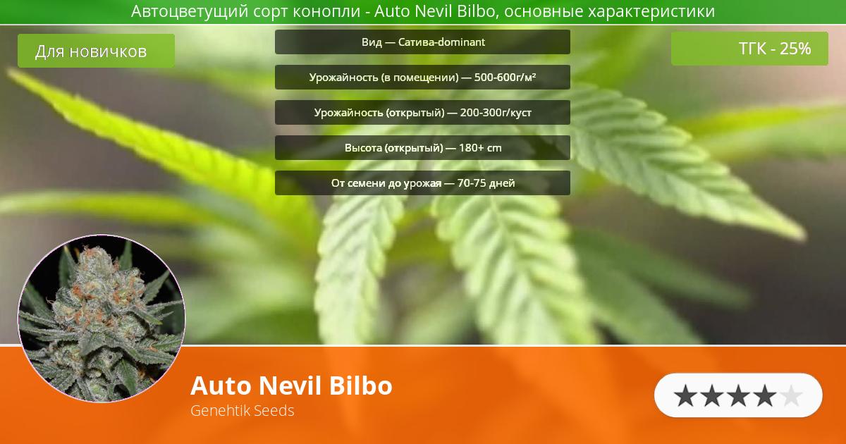 Инфограмма сорта марихуаны Auto Nevil Bilbo