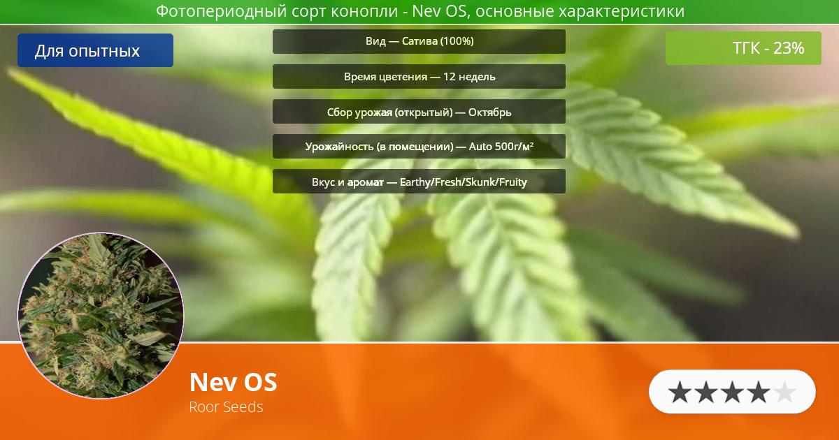 Инфограмма сорта марихуаны Nev OS
